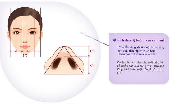 Hình dáng cánh mũi lý tưởng